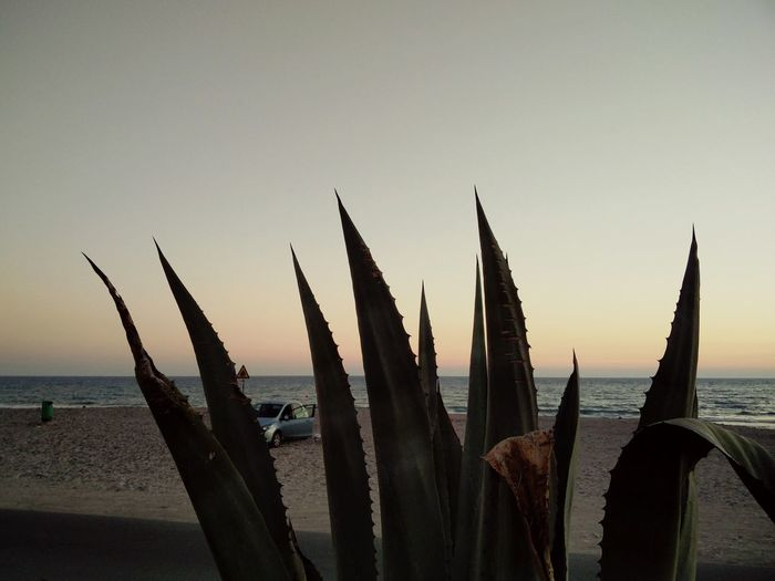 Huge Aloe and Mediterranean  Sea At Dusk on the Beach on Cyprus 🇨🇾 Life Is A Beach Plants Nature Outdoors Sea And Sky Seaside Seascape Sea View Sunset Plants 🌱 Beach Life Landscape From Where I Stand Travel Photography Summer Views EyeEm Best Shots - Nature EyeEm Nature Lover Eyeemphoto