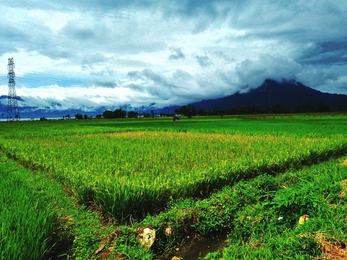 rice fields EyeEmNewHere Urban Exterior INDONESIA Holiday Vacations Clouds And Sky Minangkabau Rancak Mountain Green Landscape Landscape_photography Irrigation Equipment Rural Scene Agriculture Field Rice Paddy Crop  Farm Sky Landscape Cloud - Sky Cereal Plant Plantation Combine Harvester Wheat Rye - Grain Whole Wheat