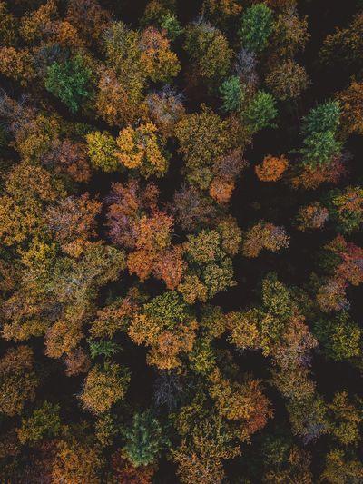 Full frame shot of trees growing on land