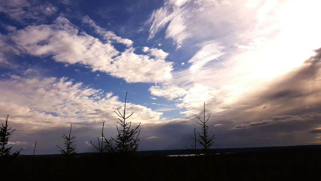 Stockholm, Sweden Ekerö Trees Sky Clouds Love Love <3 Uphigh Clouds And Sky Life Heaven Peaceful View Nature