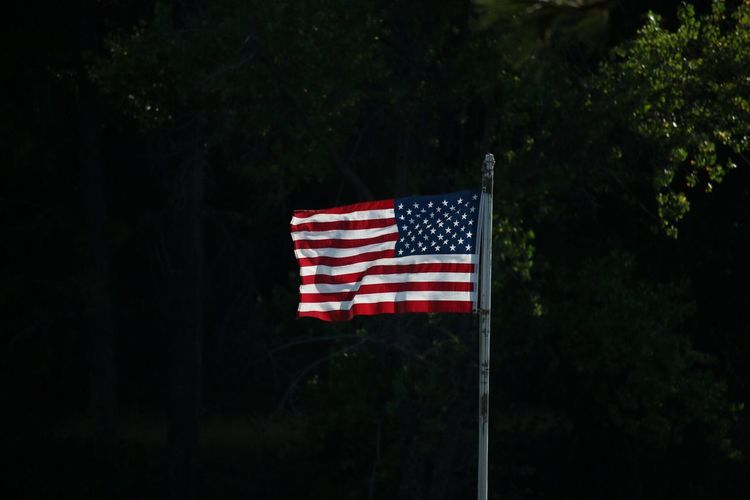 Close-up of american flag against tree