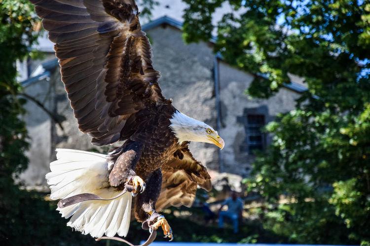 Aigle Pêcheur Bird Eagle Envol Hawk Nature No People Rapace  Wildlife