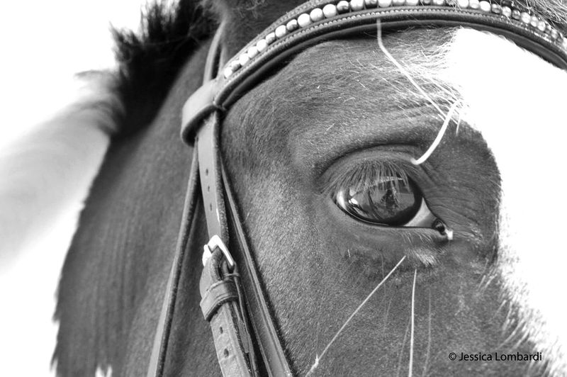 Horse Dressage Dressagerider Dressage Competition Animal Nature Nature Photography Nature_collection Close-up One Animal Bridle Domestic Animals Outdoors Animal Eye