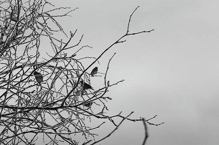 I couldn't zoom any closer Photography Photographer Winter Landscape Myphoto L4l Instagood VisitNovaScotia Novascotia Thankyoucanada Tree Ice Snow Nopower Canon CanonT5 Bird Birds