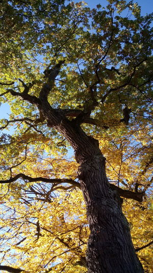 Day Low Angle View Shadow Tree Outdoors Sunlight Nature Beauty In Nature Sky Autumn🍁🍁🍁 Autumn Colors Leaves Branches