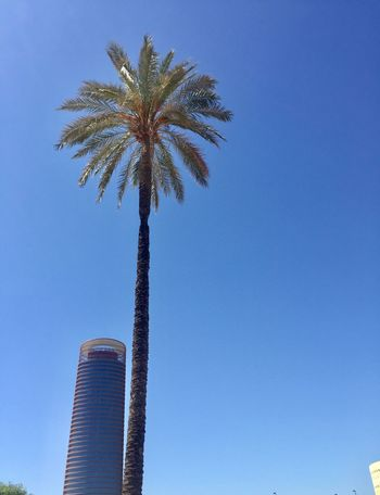 Sky Palm Tree Tropical Climate Blue Tree Low Angle View Clear Sky Sky Palm Tree Tropical Climate Blue Tree Low Angle View Clear Sky Tall - High Built Structure Day Building Exterior No People Tower Outdoors Building