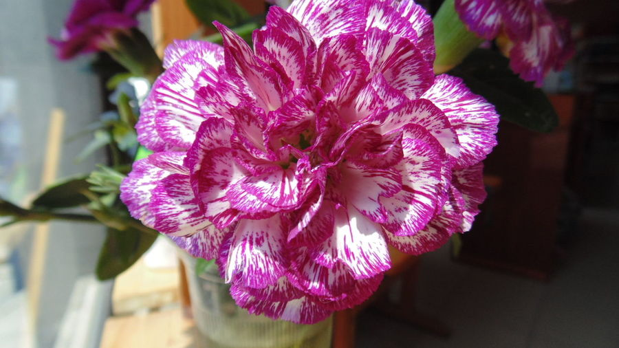 Carnation Flower Collection Flowers,Plants & Garden Flowers, Nature And Beauty
