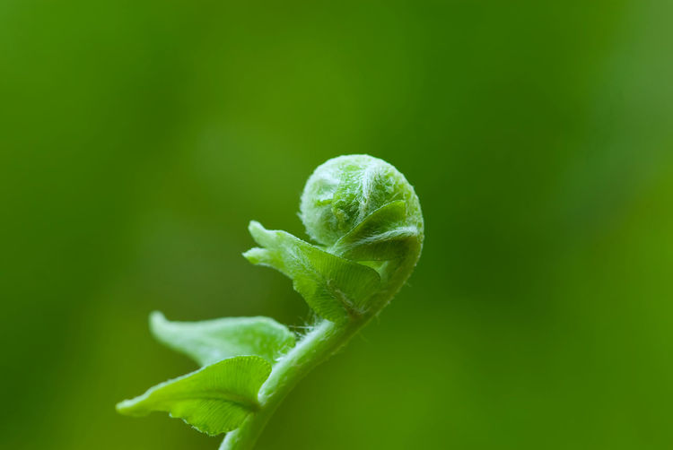 Exotic green tropical ferns with shallow depth of field