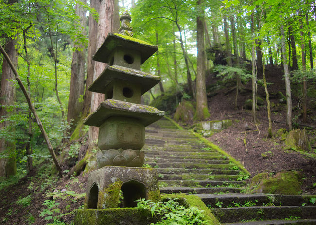 Pathway stairs in Nikko in Japan. Japan Japanese Culture Nature Nikko Shinto Shrine Beauty In Nature Belief Built Structure Day Forest Green Color Growth Land Nature No People Outdoors Place Of Worship Plant Religion Solid Spirituality Tranquil Scene Tranquility Tree WoodLand