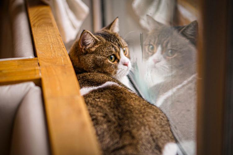 A cool cat in window