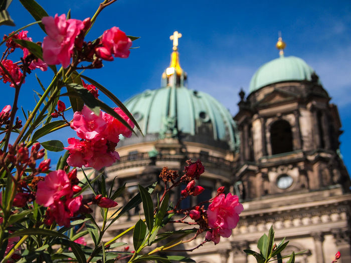 Low angle view of pink flowers against berlin cathedral