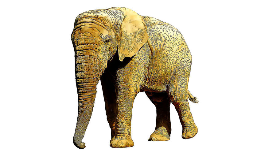Studio Shot White Background Elephant Indoors  Cut Out Animal No People Animal Themes One Animal Vertebrate Copy Space Animal Wildlife Mammal Still Life Front View Animal Body Part Animals In The Wild Close-up Full Length Brown Animal Trunk Cartoon