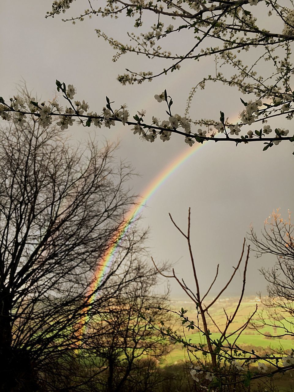 rainbow, double rainbow, tree, nature, bare tree, no people, beauty in nature, outdoors, day, scenics, multi colored, sky, branch, flying, spectrum, bird, bubble wand