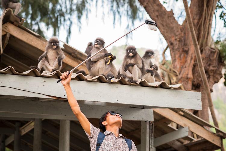 Man taking selfie of monkeys sitting on roof