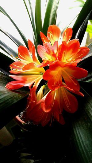 Flower Orange Color Beauty In Nature Plant Freshness Pollen Flower Head