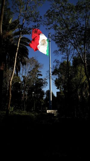 Mexican patriotism Mexico Mexican Flag Flags In The Wind  Mexican Culture Mexicano Bandera De Mexico Bandera Bandera Mexicana Mexican Flag Trees Forest Patriotism Patriotic Patriotismo
