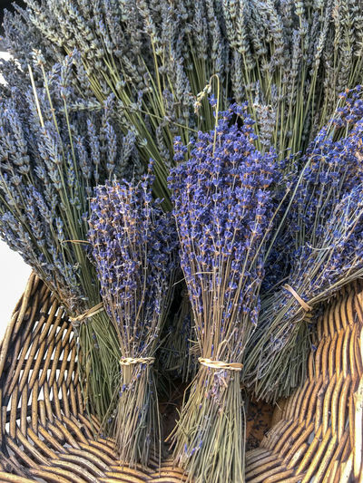 Farmers Market Fresh Produce Nature Abundance Beauty In Nature Broom Close-up Day Field Flower Flowering Plant Fragility Freshness Growth High Angle View Lavender Nature No People Organic Outdoors Plant Purple Tied Up