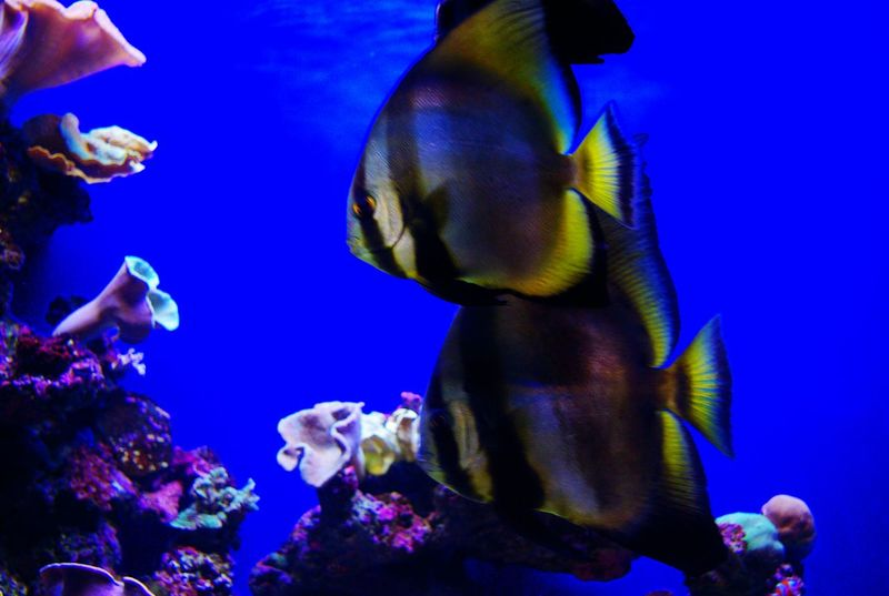Aquarium Fish... Tropical Fish Fish Fishes Aquarium Underwater Tropical Marine Life Saltwater Saltwater Fish Colourful Colours Vibrant Colour No People Water Taking Photos Eye Em Photo Two Is Better Than One