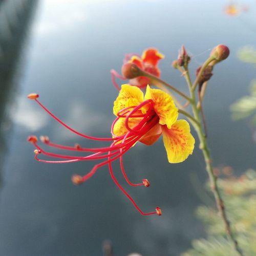 Maximum Closeness Flower Photography Flower Red Yellow Flowers