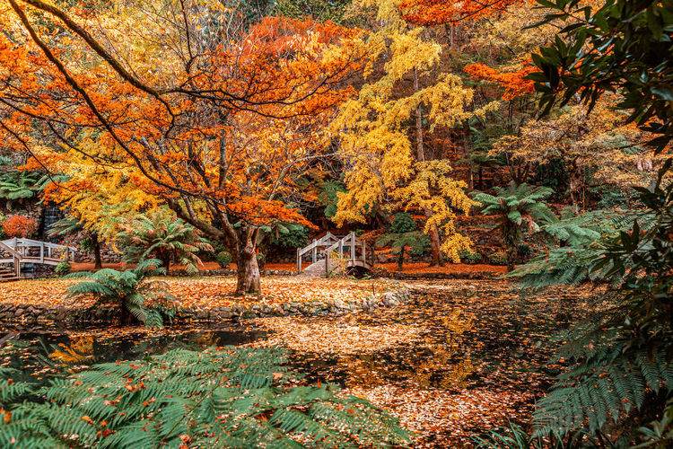 Lake by trees in forest during autumn