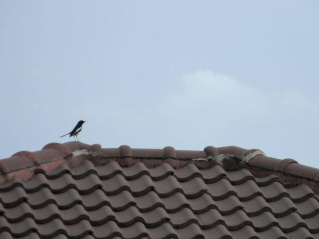 Bird No People Outdoors Sky