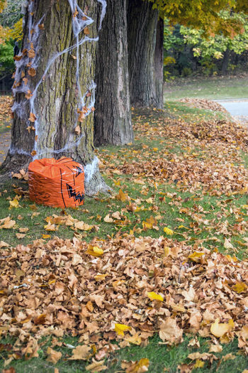 A row of trees and piles of fallen leaves show that fall is finally here Tree Plant Tree Trunk Trunk Leaf Day Autumn Nature Land Orange Color Change Park Outdoors Dry Beauty In Nature Leaves Small Town USA Autumn Fall Fallen Leaves Piles Of Leaves Nature Pumpkins Halloween Seaonal