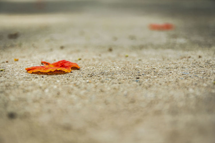 Surface level of dry leaf on street