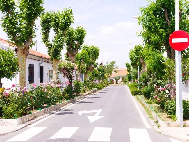 The Way Forward Street Tree Road Architecture Road Sign Growth Built Structure Garden Salamanca Architecture_collection Urban Landscape Garden Photography Urban Lifestyle Streetphotography Cityscape Urban Gardening Urban Garden Nature City Road Growth Architecture Building Exterior City
