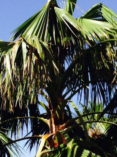 Plant Growth Leaf Low Angle View Tree Plant Part Palm Tree Palm Leaf