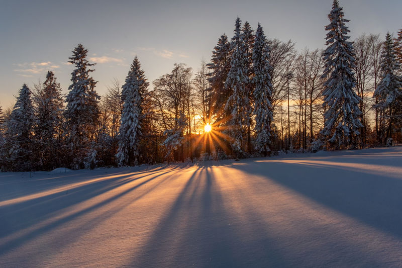 Snow covered road amidst trees against sky during sunset