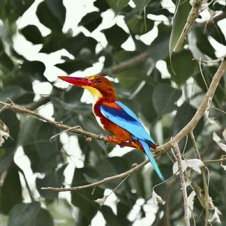 Kingfisher Nature Birds Wildlife Canon60d Canon Nationalgeographic_ Discoverychannel EyeEm Best Shots Eyemnaturelover