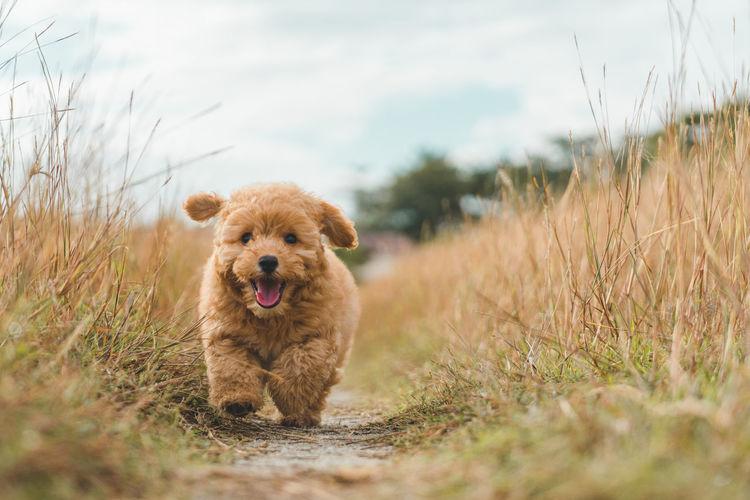Portrait of dog running on grass