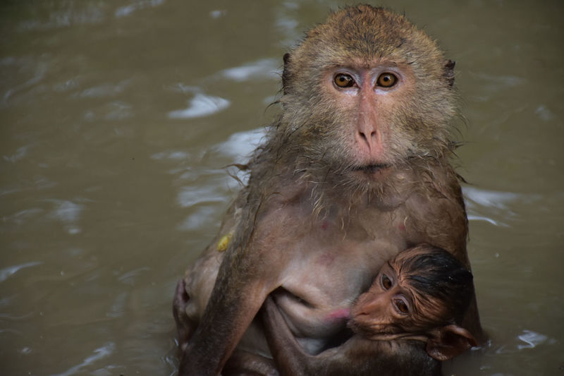 Animal Family Animal Themes Animal Wildlife Animals In The Wild Close-up Infant Japanese Macaque Mammal Monkey Nature Outdoors Togetherness Two Animals Water Young Animal