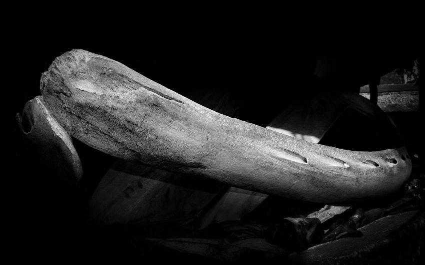 Part mouth skeleton of a humpback whale that drifted ashore in 1992 Skeleton Skeletons Humpback Whale Whales Whale EyeEm Best Shots EyeEm Gallery EyeEm Selects Minimalism Minimal Mombasa Kenya Jesus Kenya Photographer Photography Human Hand