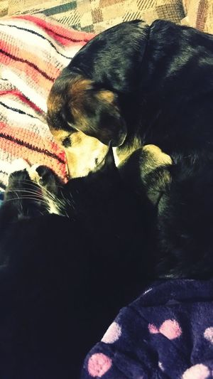 Relaxing Animal Love Sleeping Cat Dogs And Cats Living Together Sleepy Time Cuddle Buddies Kitty Cuddles Dog Sleeping  Puppy Cuddle Time Dog Love