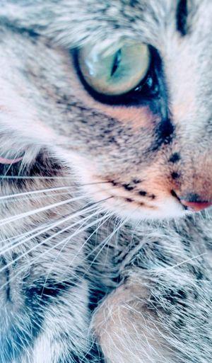 cat Pets One