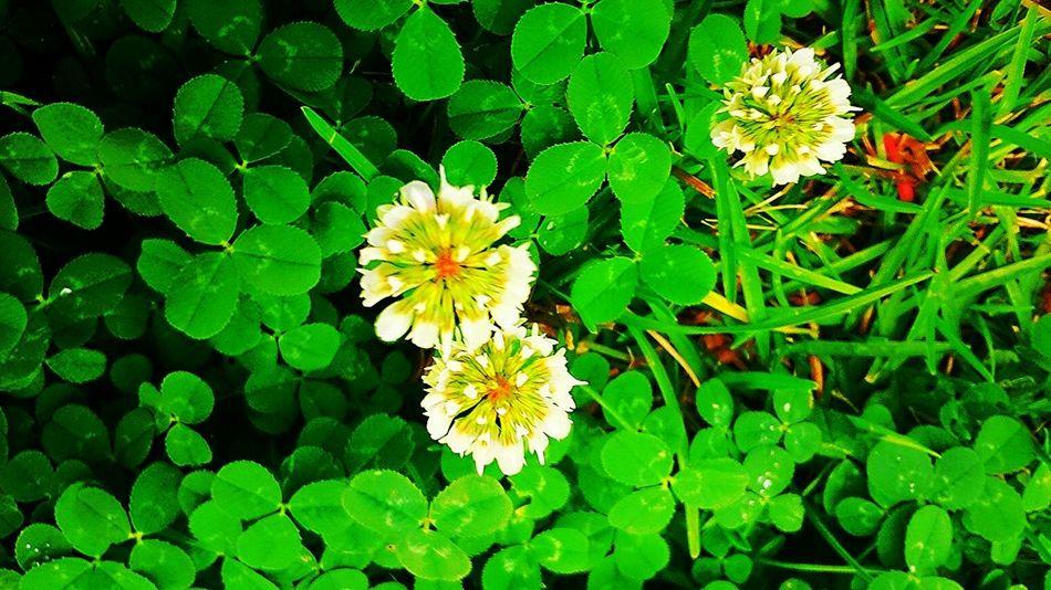 Flowerporn Flower EyeEm Best Shots Natural