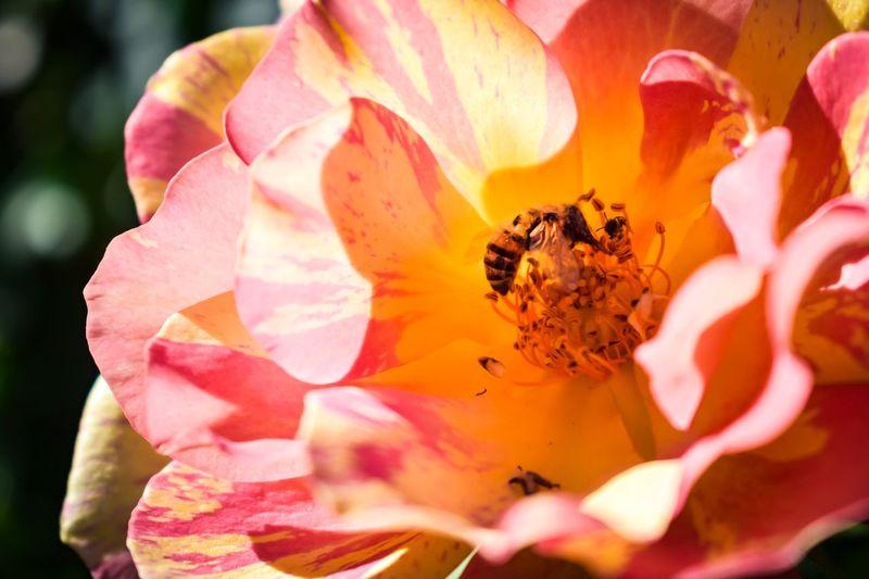 Worker bee!!