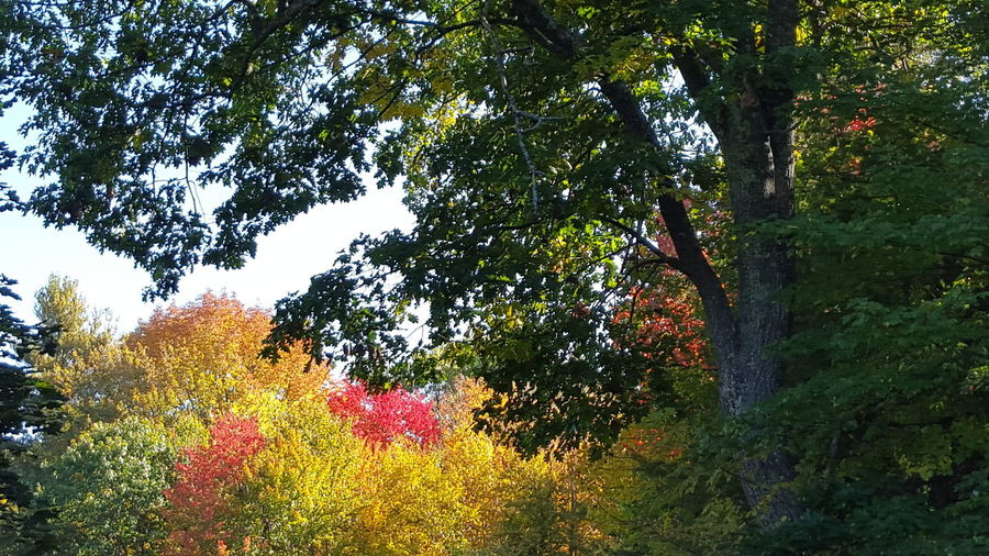 A Beautiful Audum Day In New England Autumn Beauty In Nature Day Growth Nature Outdoors Tree