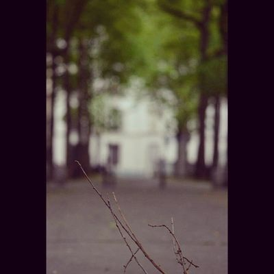 Why_not Cool Look Place France ile_de_france france paris Paris like like4like photooftheday photo pic picoftheday bestoftheday picture flou tree nature natural street strange rue Paris_XVe