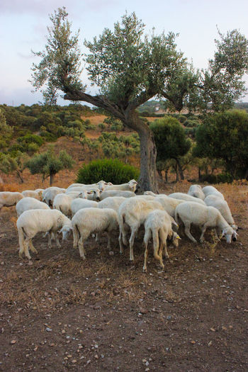 Pets Livestock