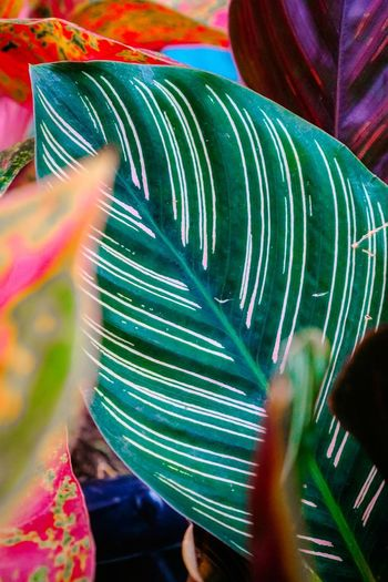 Close-up of feather on leaves