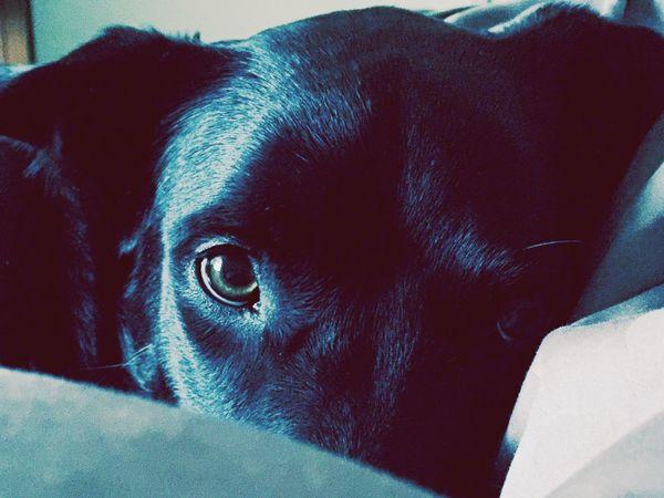 Dog Dogslife Betty Black Betty Angelcakes Loveofmylife