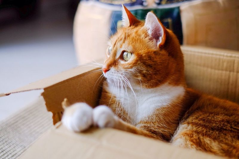 Cat relaxing in cardboard box at home