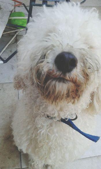 Pet Photography  Dog Love Pompom Lovepet