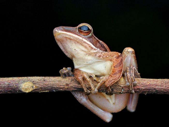 Close-up of frog on branch against black background