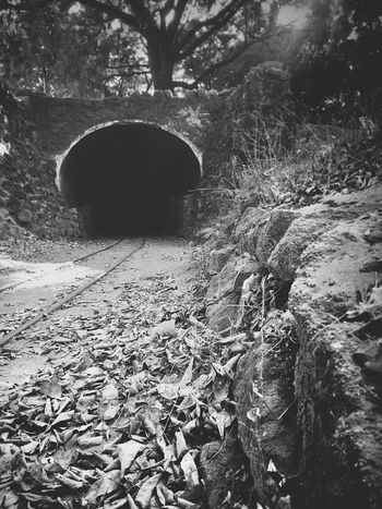 Black And White Traintracks Trees
