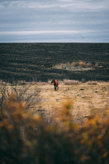 High angle view of horse on field against cloudy sky