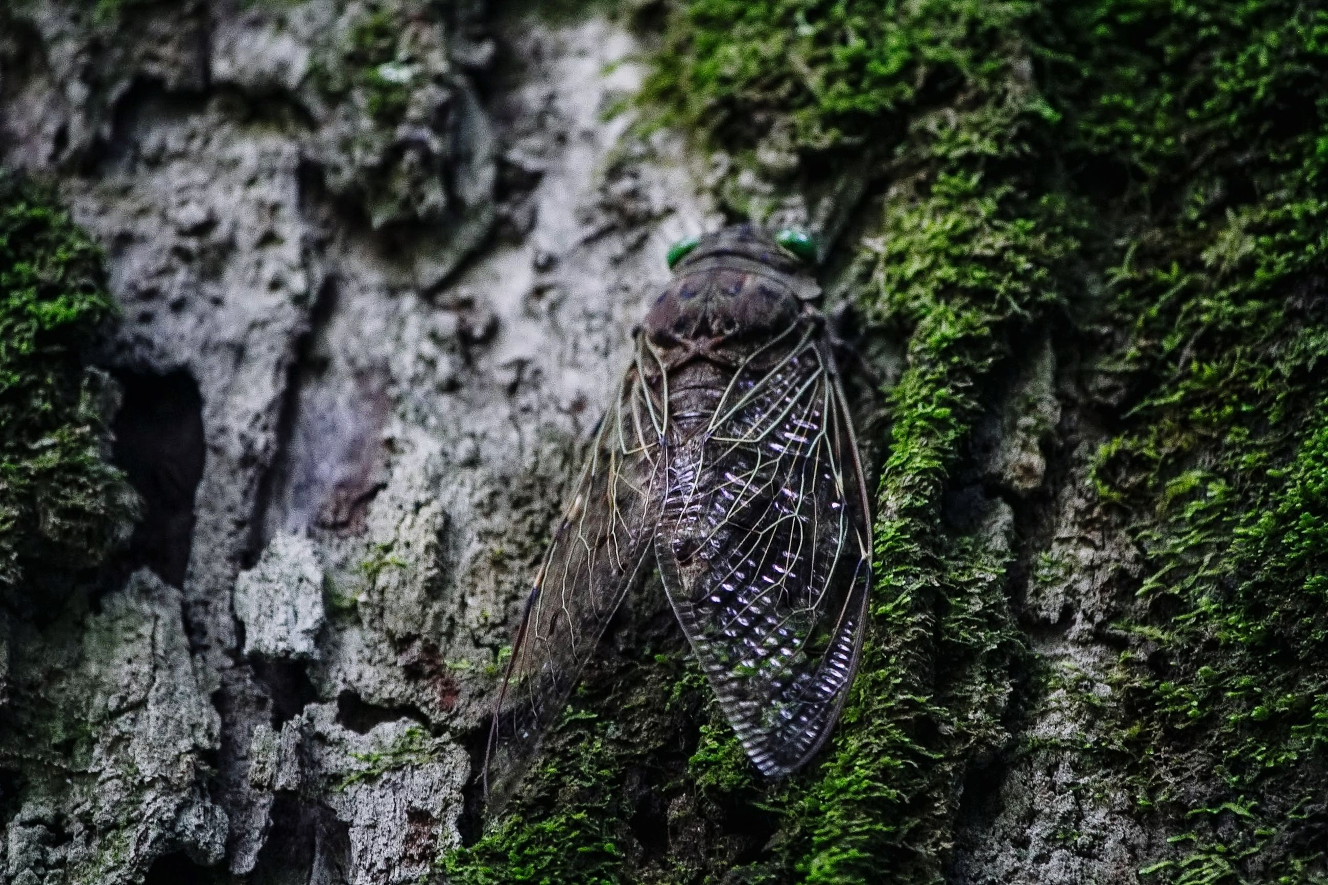 tree, no people, plant, nature, day, textured, moss, focus on foreground, tree trunk, trunk, outdoors, selective focus, growth, close-up, rock, solid, tranquility, rough, rock - object, beauty in nature, bark