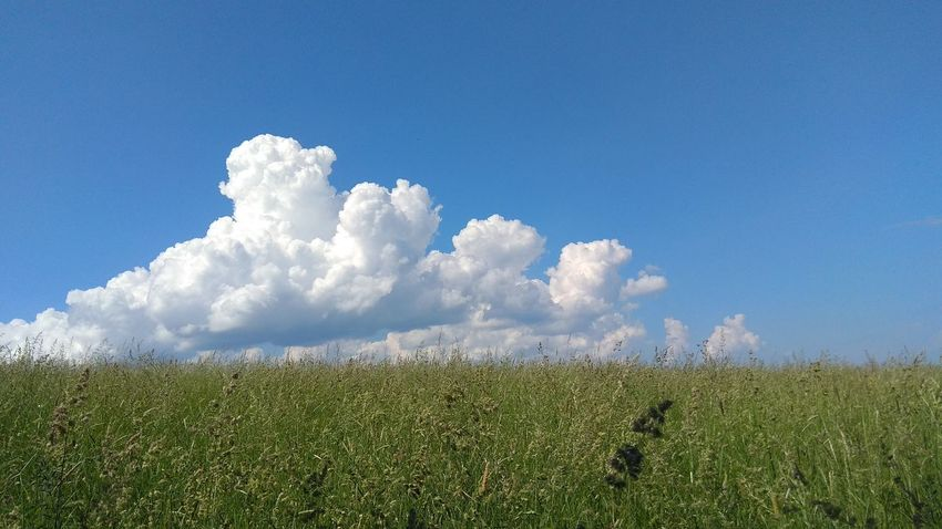 Flower Blue Rural Scene Agriculture Field Cereal Plant Crop  Sky Landscape Grass